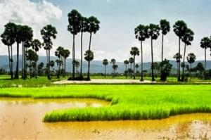 vakantie cambodja, reis cambodja, rondreis cambodja, rondreizen cambodja, reizen cambodja, airbnb cambodja, travelbird cambodja, bookings.com cambodja, tripadvisor cambodja, hotels cambodja, natuurreizen cambodja, cultuurreizen cambodja, familiereizen cambodja, bouwstenen cambodja, dimsum cambodja, djoser cambodja, 333travel cambodja, snp cambodja, homestay cambodja, reizen angkor wat, vakantie angkor wat, reis angkor wat, privereis cambodja, privéreizen cambodja, autoreis cambodja,
