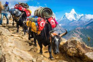Trekking en Wandeltochten Nepal met NativeTravel