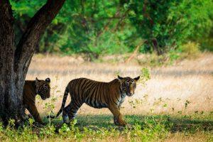 Rondreizen Nepal met NativeTravel